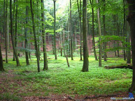 Stubnitz Buchenwald Nationalpark Jasmund